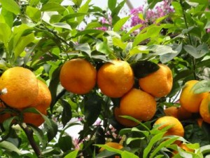 Früchte des Lebens - Fähigkeiten erkennen